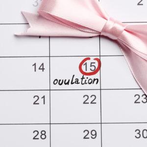 ovulation Planning calendar. Girl
