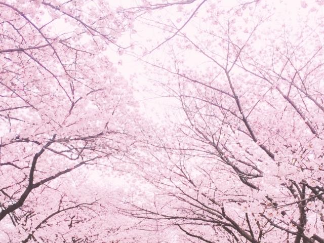 花粉やウィルスなどの季節を快適に過ごそう!
