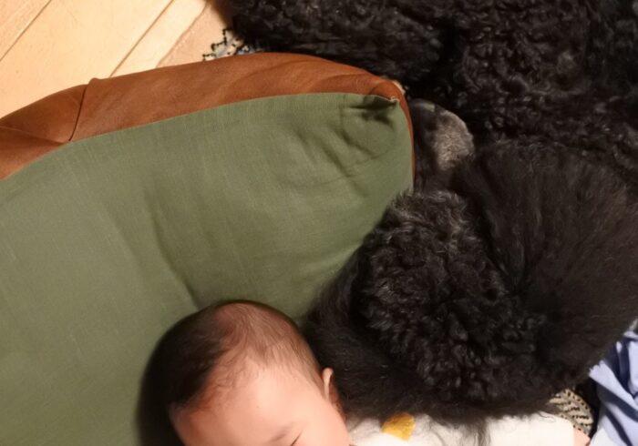 ケイトが解説! 寝ない子どもと寝る子ども、違いはどこにある? よく寝る子に育てるコツとは?