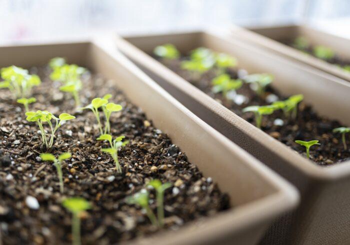 ベランダ家庭菜園で節約できる?初心者でも簡単な野菜や栽培方法とは
